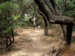 06-los-padres-trail
