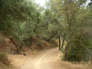 LR-meadow-vista-trail