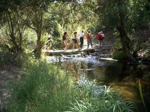WW-stream-crossing